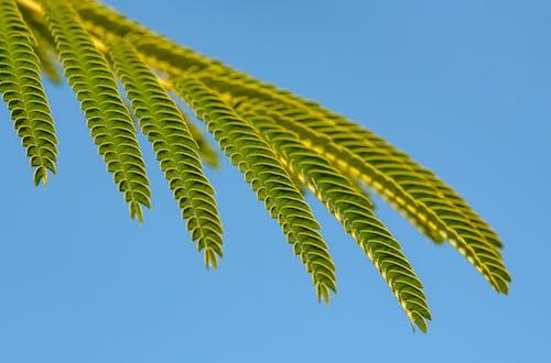 Kostenloses Stock Foto zu blatt, botanisch, draußen
