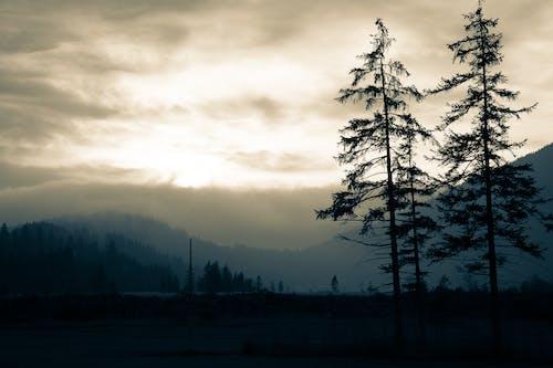 คลังภาพถ่ายฟรี ของ ซีลูเอตต์, ต้นไม้, ธรรมชาติ
