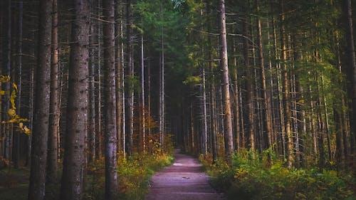 คลังภาพถ่ายฟรี ของ ต้นไม้, ถนนลูกรัง, ธรรมชาติ