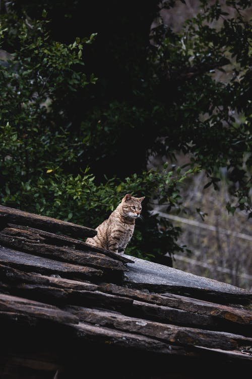 Photo Of Tabby Cat On Top Of Rock