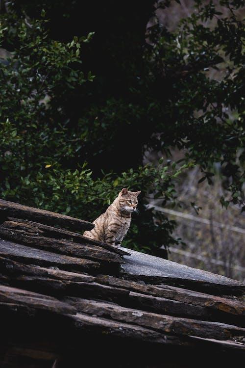 가정의, 고양잇과 동물, 귀여운, 길들여진의 무료 스톡 사진