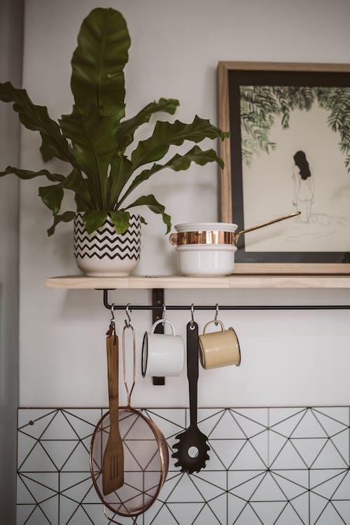 Fotos de stock gratuitas de decoración, estante, planta