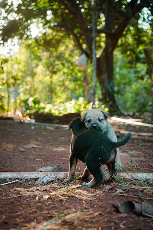オリジナル, かわいい犬, 可愛いの無料の写真素材