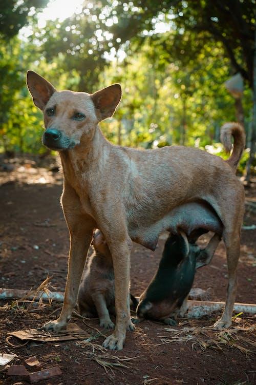 オリジナル, かわいい犬, 動物愛の無料の写真素材