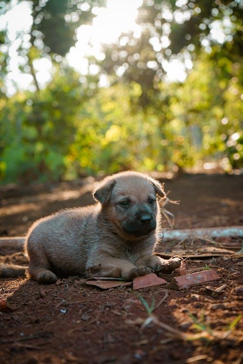 オリジナル, かわいい犬, さびしい目の無料の写真素材