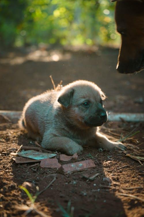 オリジナル, かわいい犬, きらめき目の無料の写真素材