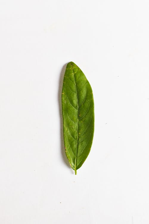 Close-Up Photo Of Leaf