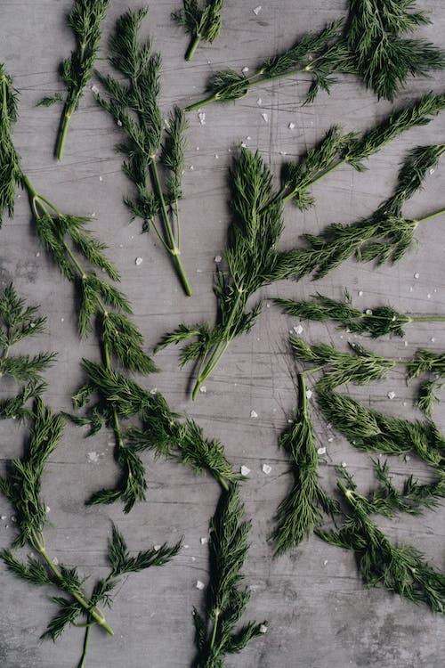 Photos gratuites de à base de plantes, aromatique, comité, conseil