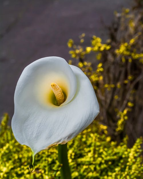 Close-Up Photo Of White Flower