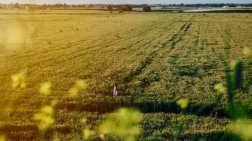 Foto profissional grátis de ao ar livre, campina, ecológico, grama