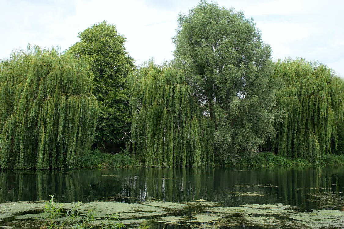 Green Trees Beside River