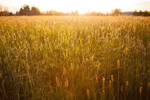 Immagine gratuita di alberi, azienda agricola, campo, cielo