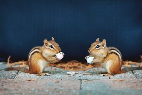下午茶时间, 休息時間, 動物 的 免费素材图片