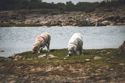 Dogs wandering on rocky shore