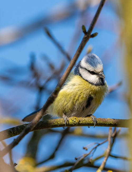 Fotos de stock gratuitas de animal, animal salvaje, aviar