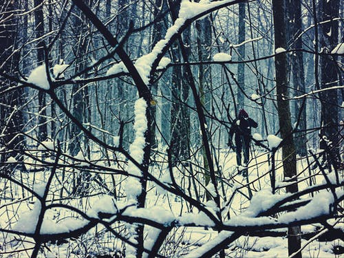 Person in Black Jacket Walking In The Woods On A Snowy Day