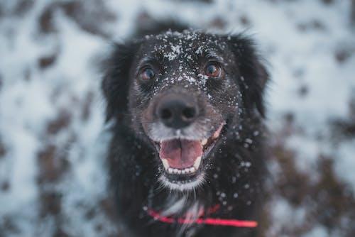 Close-Up Photo Of Black Dog