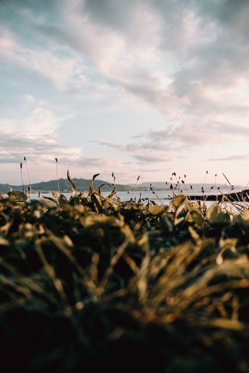 Overgrown meadow on coastline of sea