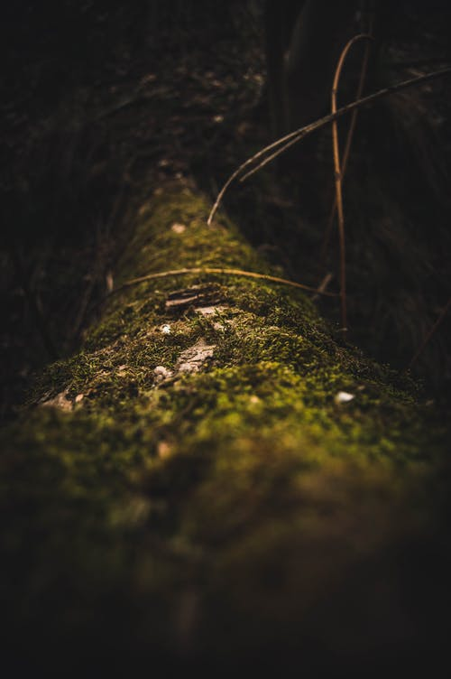 From above of of fallen tree trunk covered with green moss in dark forest