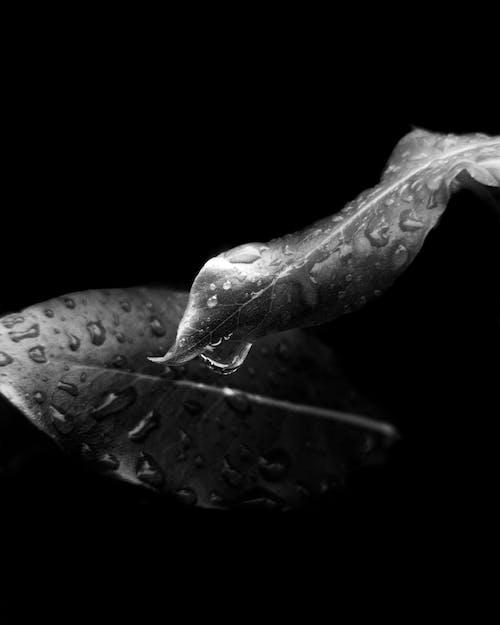 모노톤의, 집중, 초록색 잎, 초점의 무료 스톡 사진