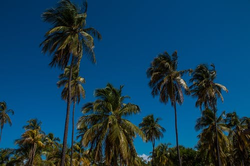 Free stock photo of caribbean, palm springs, paradise, summer