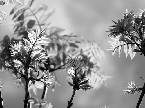 คลังภาพถ่ายฟรี ของ ก้านดอก, การเจริญเติบโต, กิ่งไม้