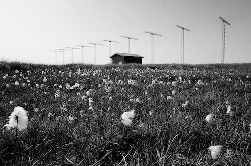 Foto stok gratis agrikultura, alam, Arsitektur, bangsa