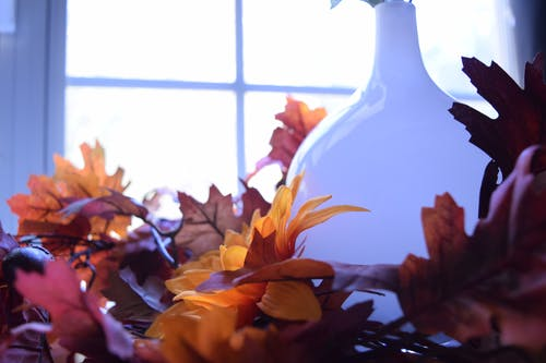 Free stock photo of vase