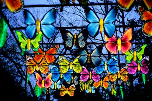 Free stock photo of butterflies, lanterns, lights