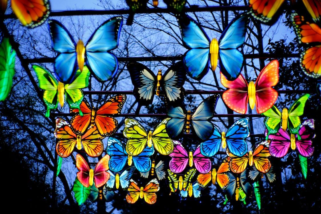 Free stock photo of butterflies, lanterns, lights