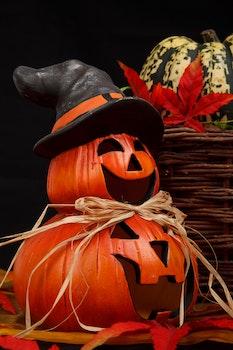 Free stock photo of autumn, decoration, halloween, pumpkin