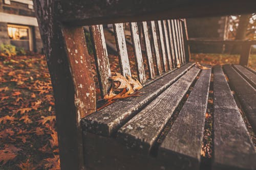 Filtered Photography of Bench With Dried Maple Leaves