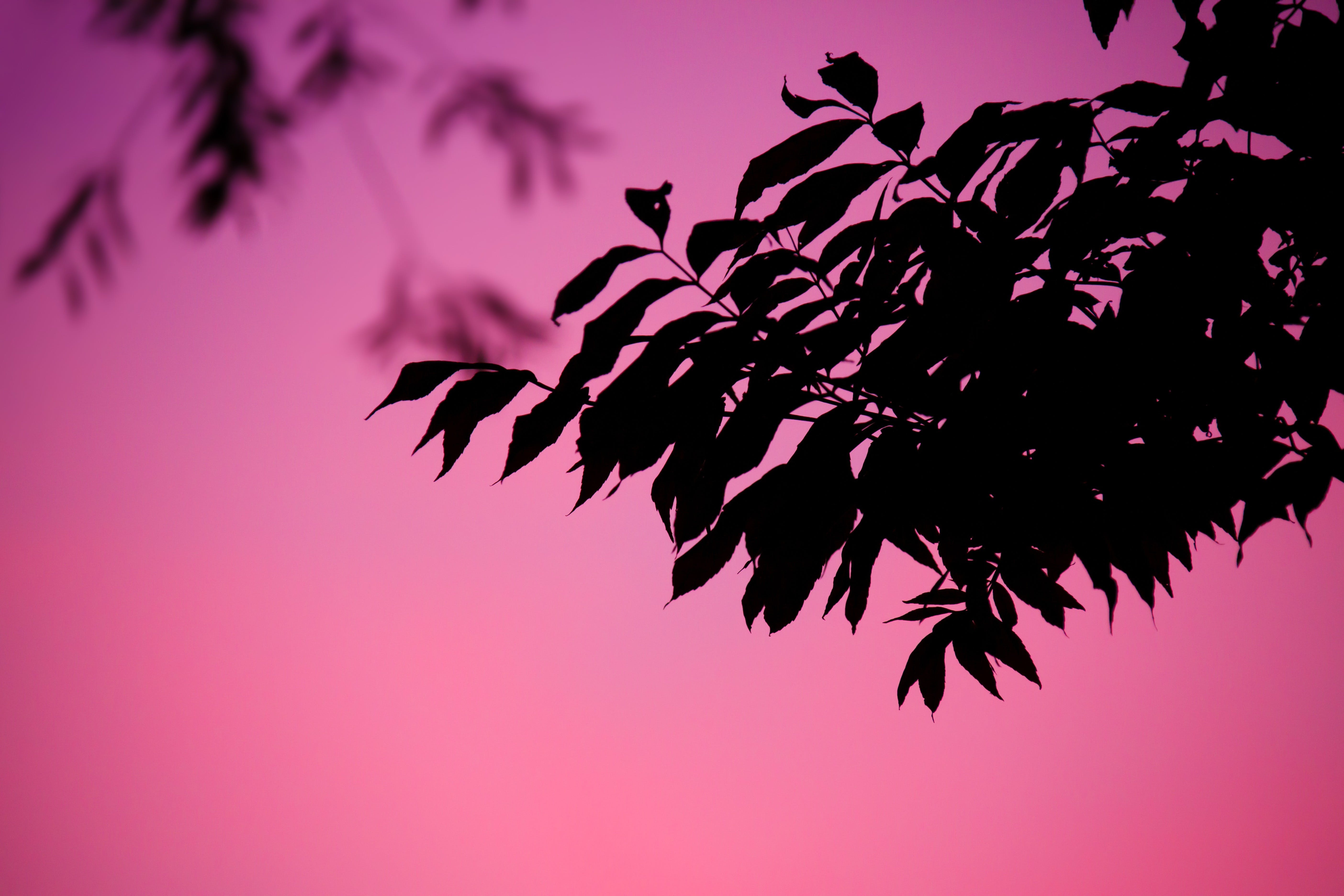 Silhouettes of Leaves during Dawn