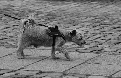 Photos gratuites de animal de compagnie, canin, chien, course de chien