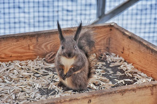 Curious squirrel sitting in old box in zoo