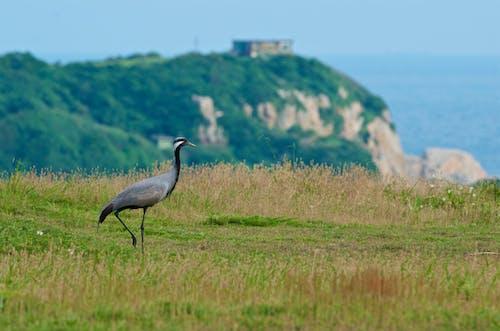 Stork walking on green grass near mountains and ocean