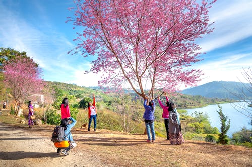 Photo of Women Standing Near Pink Leafed Tree