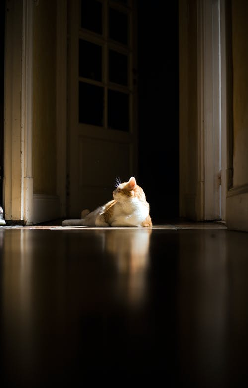 Free stock photo of cat, hall, reflection