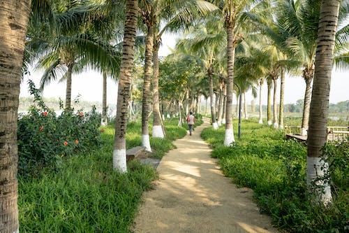 People Walking on Pathway Between Palm Trees
