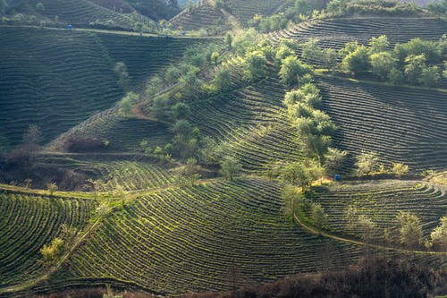 Бесплатное стоковое фото с Аэрофотосъемка, вид сверху, гора