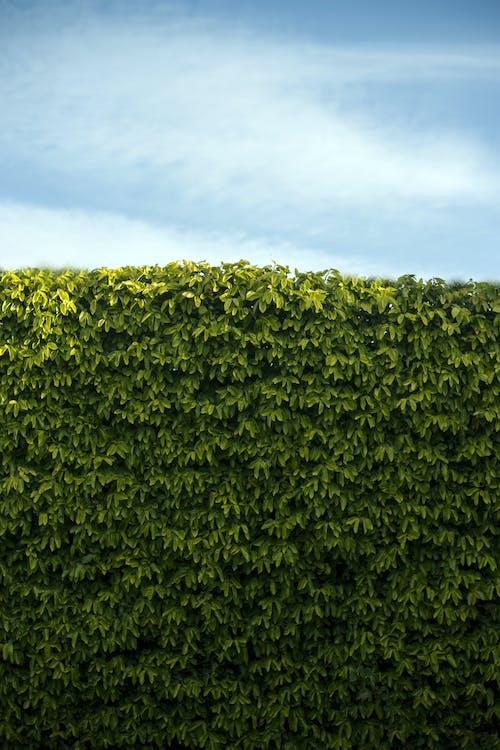 Green garden living fence on summer day