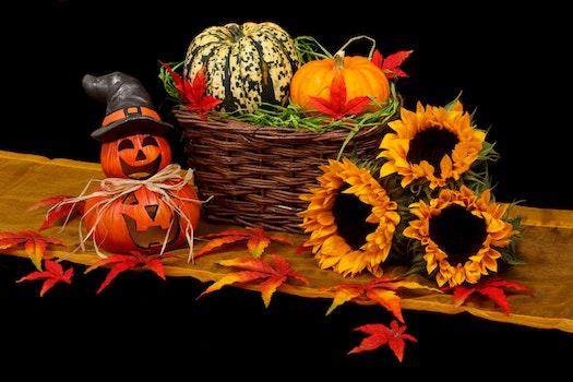 Free stock photo of holiday, autumn, fall, decoration