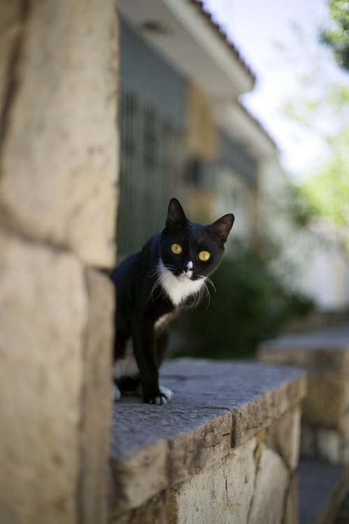 Funny curious black kitten with white neck peeking out stone wall on sunny street
