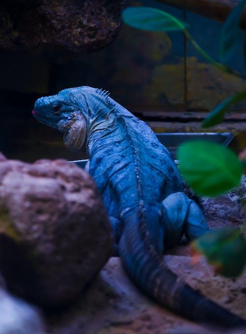 Foto profissional grátis de ameaçado de extinção, animais selvagens, animal, artificial