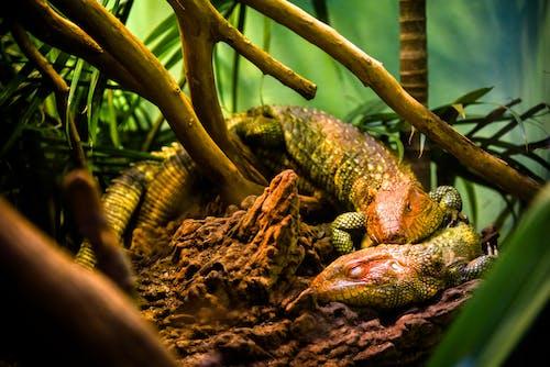 Close-Up Photo Of Reptiles