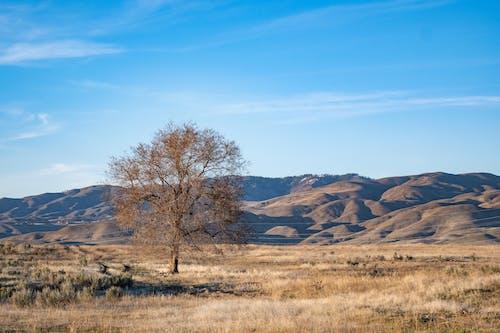 丘陵, 天性, 天空, 山 的 免费素材图片