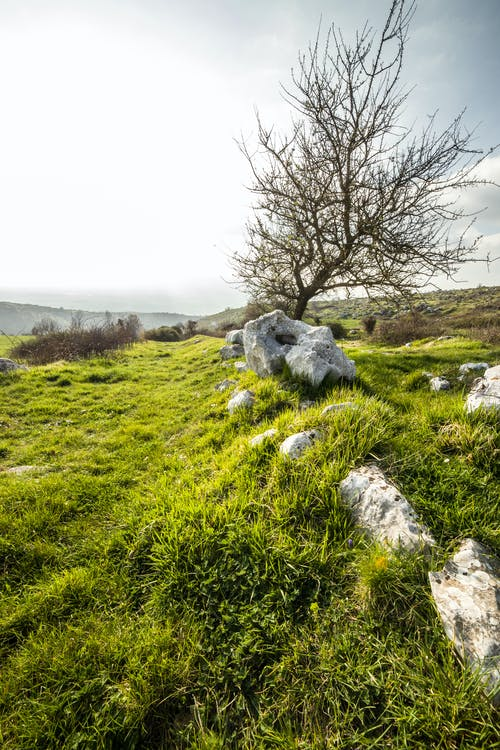 Grassy hill with stones and tree