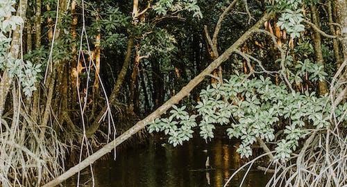のどか, ジャングル, 成長, 木の無料の写真素材