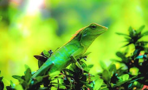 Photos gratuites de animal, biologie, brouiller