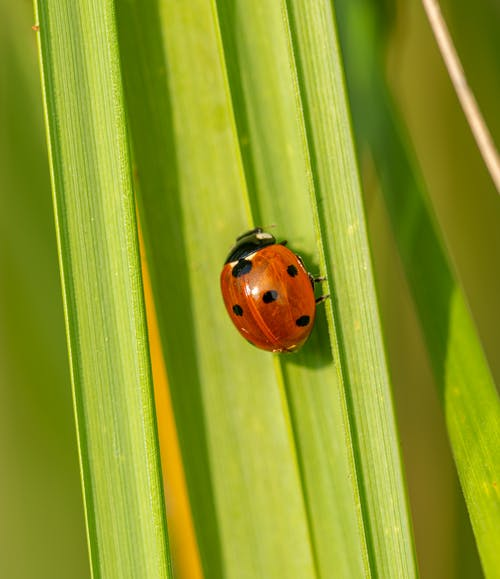 Small red ladybug on green plant under bright sunlight